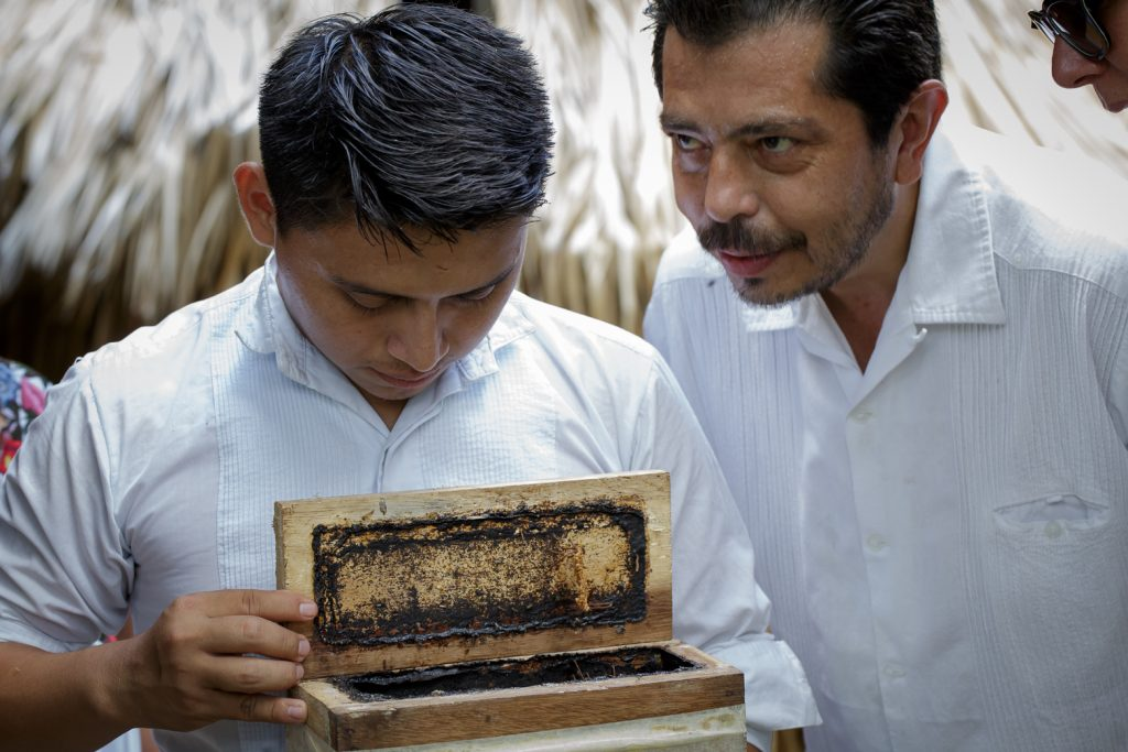 Home of the tiniest bees that live at Casa Itzamná