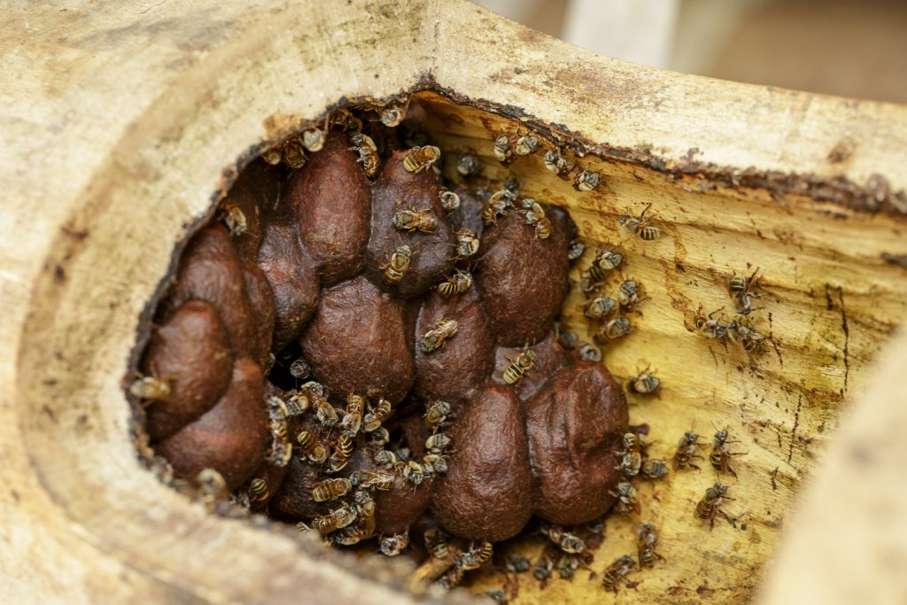 Honey pots in the hive