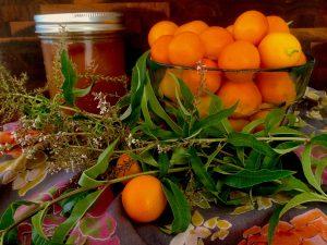 cala shrub ingredients